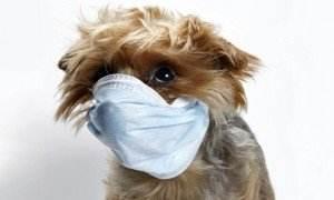 alergie la caini 19.02.2015  - alergie la caini 19 - Poate esti alergic la cainele tau?