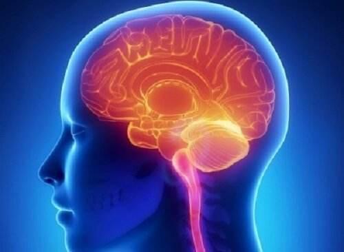 creșterea creierului pierdere în greutate)